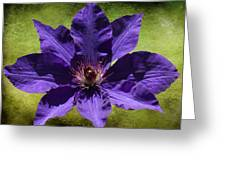 Clematis On Stone Greeting Card