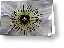 Clematis Stamen Greeting Card