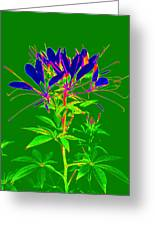 Cleome Gone Abstract Greeting Card