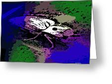 Click Beetle On Porsche Greeting Card