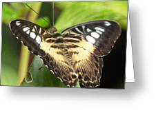 Clipper Butterfly Greeting Card