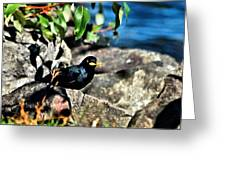 Cllecting Nesting Materials Greeting Card