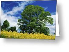 Clonmel, County Tipperary, Ireland Greeting Card