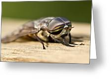 Close Encounter With A Horsefly Greeting Card by Dean Bennett