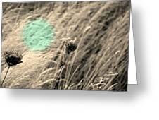 Close Up Breeze Greeting Card