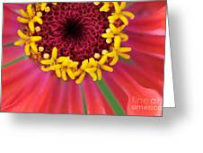 Close Up Dahlia Greeting Card