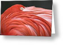 Close Up Of A Flamingo Resting Its Head Greeting Card