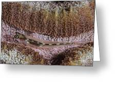 Close-up Of A Goby, Indonesia Greeting Card