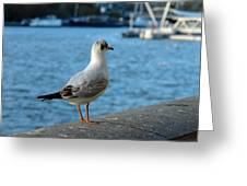 Close Up Of A Tern Next To The Thames And London Eye Greeting Card
