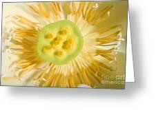 Close-up Of American Lotus Nelumbo Lutea Greeting Card