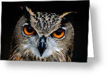 Close Up Of An African Eagle Owl Greeting Card