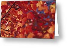 Close-up Of Autumn Leaves Greeting Card