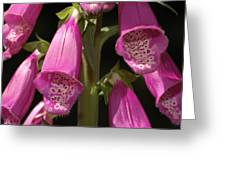 Close Up Of Foxglove Digitalis Flowers Greeting Card