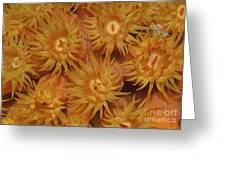 Close-up Of Orange Cup Coral Greeting Card