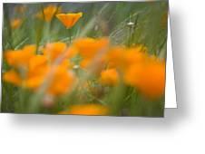 Close Up Of Orange Poppy Flowers Greeting Card