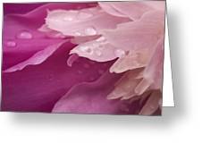 Close-up Of Pink Flower Greeting Card