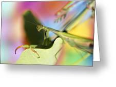 Close-up Of Praying Mantis Greeting Card