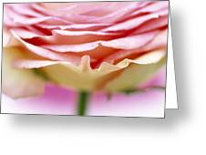 Close Up Of Rose Showing Petal Detail Greeting Card
