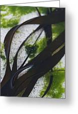 Close-up Of Seaweed In Water Greeting Card