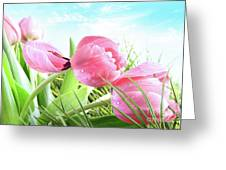 Close-up Of  Spring Tulips  Greeting Card