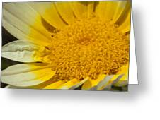 Close Up Of The Inside Of A Yellow And White Sun Flower Greeting Card