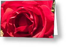 Close Up Of The Petals Of A Red Rose Greeting Card