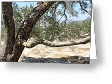 Close Up Olive Tree Greeting Card