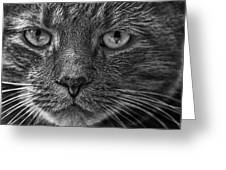 Close Up Portrait Of A Cat Greeting Card