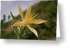 Close-up View Of A Blazing Star Greeting Card