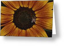 Close View Of A Bee On A Sunflower Greeting Card