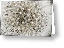 Close View Of A Dandelion Seed Head Greeting Card