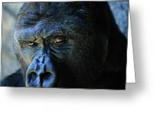 Close View Of A Gorilla Gorilla Gorilla Greeting Card