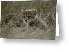 Close View Of A Juvenile Cheetah Greeting Card