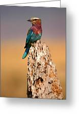Close View Of A Lilac-breasted Roller Greeting Card