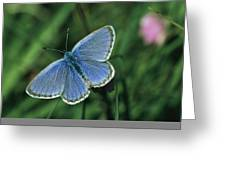 Close View Of A Maculinea Alcon Greeting Card