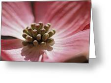 Close View Of A Pink Dogwood Blossom Greeting Card