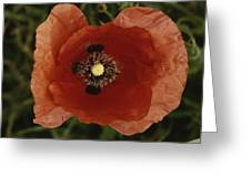 Close View Of A Poppy Greeting Card