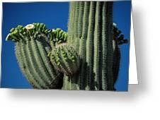 Close View Of A Saguaro Cactus Saguaro Greeting Card