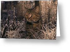 Close View Of A Tabby Cat Greeting Card
