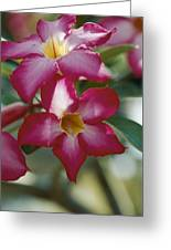Close View Of A Tree Blossom Flute Greeting Card