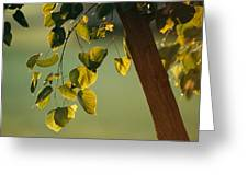 Close View Of A Tree Branch And Leaves Greeting Card