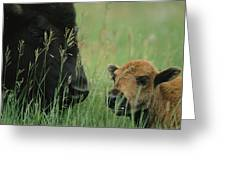 Close View Of An American Bison Greeting Card
