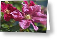 Close View Of Clematis Flowers Greeting Card