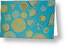 Close View Of Diatoms Greeting Card