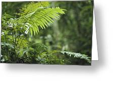 Close View Of Ferns In A Papua New Greeting Card