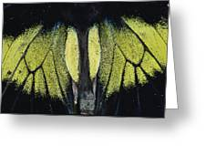 Close View Of Iridescent Moth Wings Greeting Card