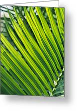 Close View Of Palm Fronds Greeting Card
