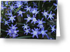 Close View Of Spring Flowers Greeting Card