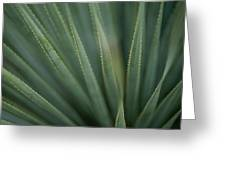 Close View Of The Leaves Of A Sotol Greeting Card