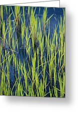 Close View Of Water Grasses Growing Greeting Card